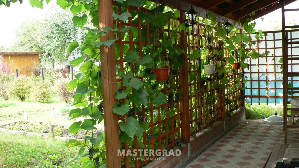 Как правильно сделать виноградник дома