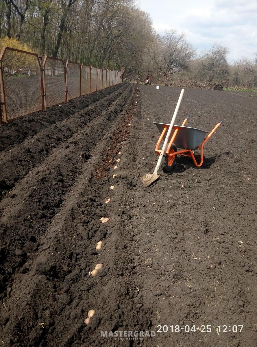 Картофель : посадка мотоблоком, нарезка борозд и окучивание 84