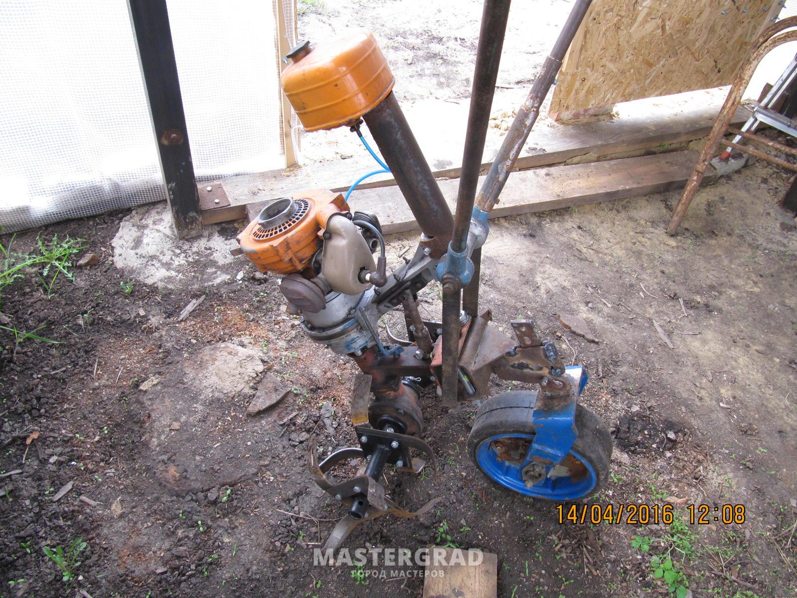 Разведение барбусов суматранских в домашних условиях