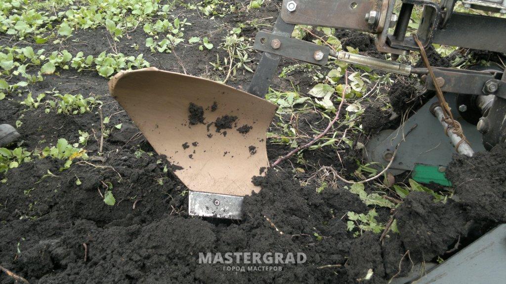 Смешные муравьи картинки словам, это